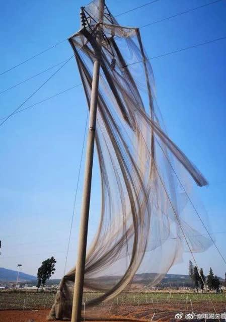 电线杆披婚纱